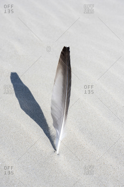 Germany, Lower Saxony, East Frisia, Juist, seagull feather in the sand.