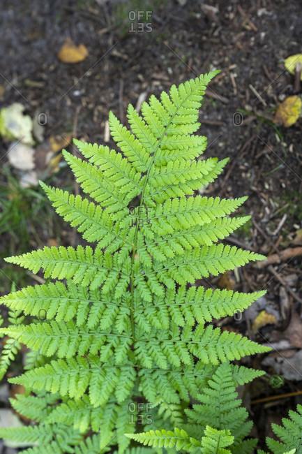 Germany, Lower Saxony, East Frisia, Juist, green fern leaf