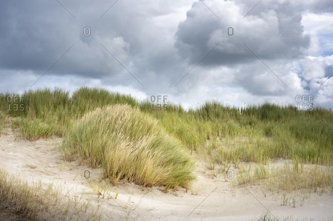 Germany, Lower Saxony, East Frisia, Juist, dune landscape.