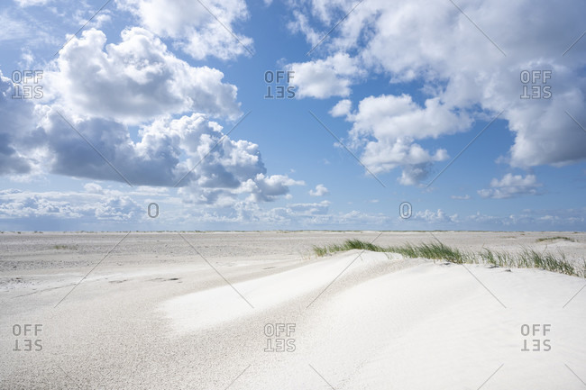Germany, Lower Saxony, East Frisia, Juist, baby dune with beach grass.