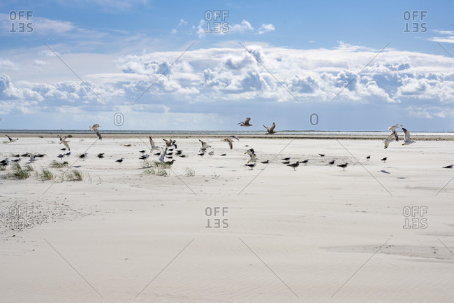 Germany, Lower Saxony, East Frisia, Juist, landscape with birds on the Juister reef.