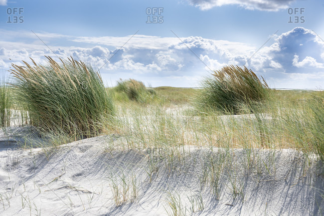 Germany, Lower Saxony, East Frisia, Juist, beach grass (Ammophila).
