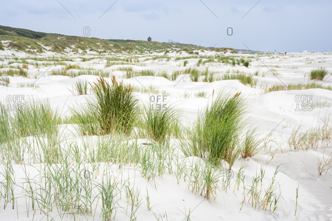 Germany, Lower Saxony, East Frisia, Juist, baby dunes on the beach.
