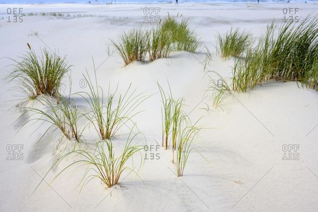 Germany, North Sea, beach grass on a sandy beach.