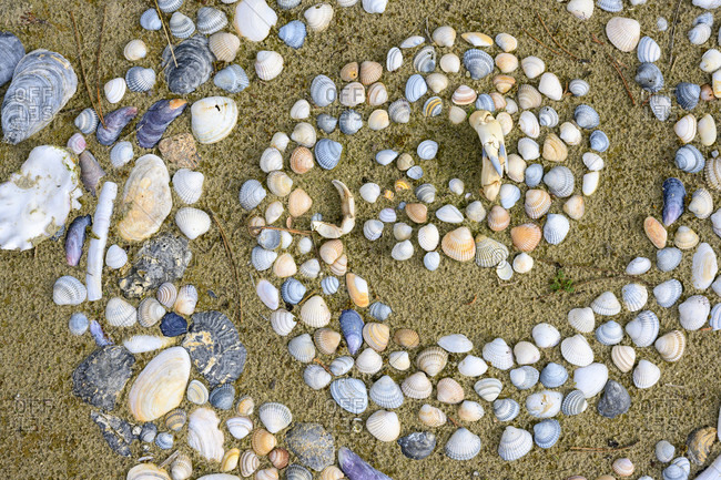 Spiral laid out of shells.