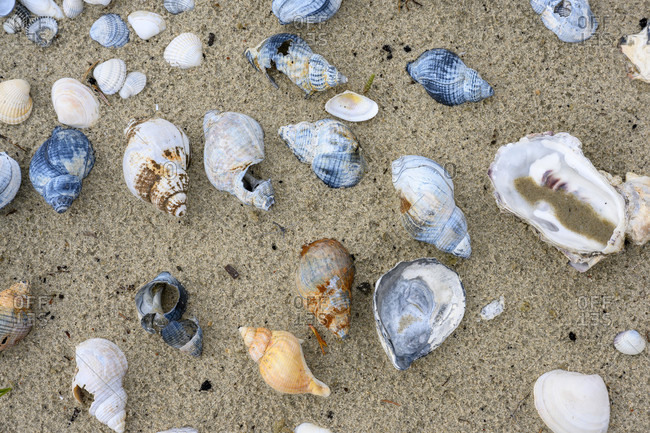 Germany, shells and snail shells on the beach.