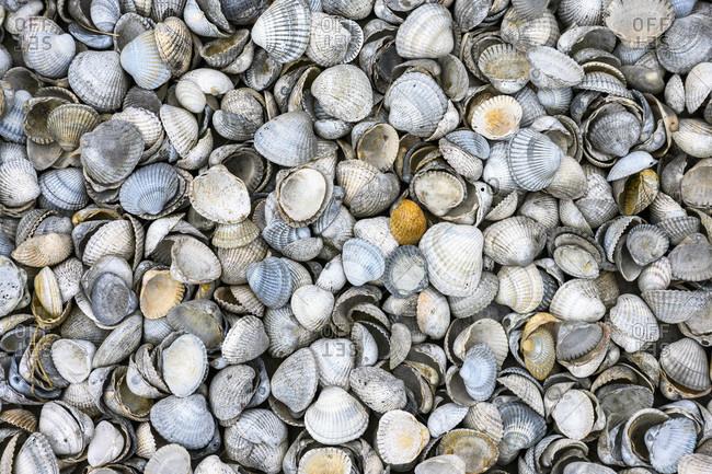 """Mussels (Bivalvia Latin bi-valvius """"two-fold"""") mollusks."""