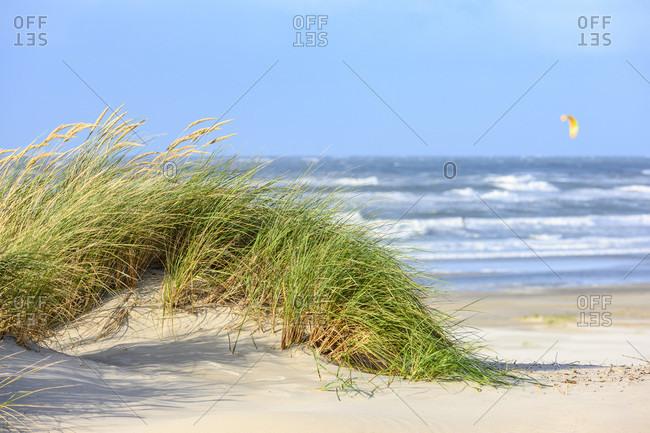 Germany, North Sea, beach grass (Ammophila).