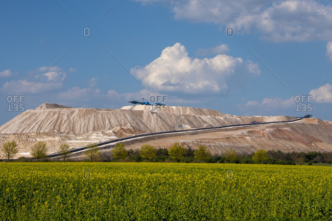 Germany, Saxony-Anhalt, Zielitz: Rapeseed blooms in a field in front of the tailings dump of the Zielitz potash plant.