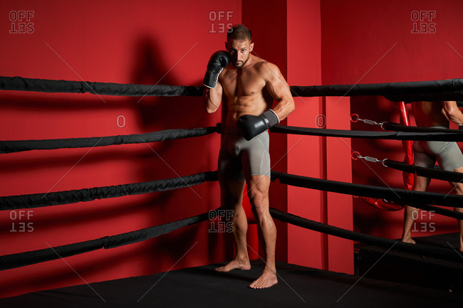 Serious young muscular male fighter in gloves standing in boxing stance in corner of ring during competition looking at camera