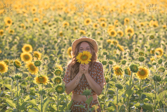 Cheerful young female in summer dress and hat smelling sunflower while standing with eyes closed amidst blooming field in sunny day in countryside