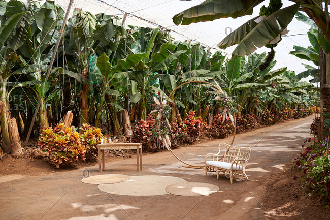 Comfortable armchair and wooden table placed in cozy green garden with banana trees on sunny day