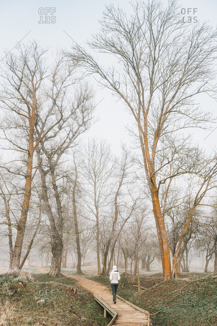 Back view of anonymous female hiker in warm clothes walking on empty wooden road among leafless trees in cold misty day in countryside in Bellver de Cerdaña , Catalunya