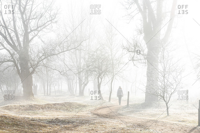 Back view of anonymous female hiker in warm clothes walking on empty road among leafless trees in cold misty day in countryside in Bellver de Cerdaña , Catalunya