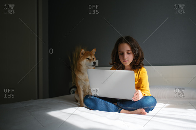 Modern preteen girl in casual outfit sitting on bed with Shiba Inu dog and browsing laptop while staying at home during free time