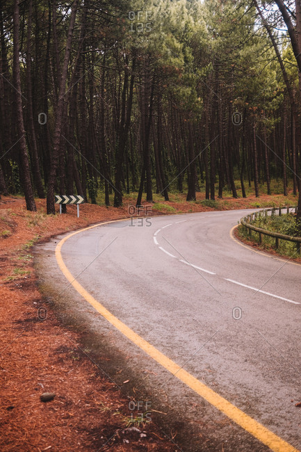 Empty narrow curved asphalt roadway running between tall green trees in summer forest