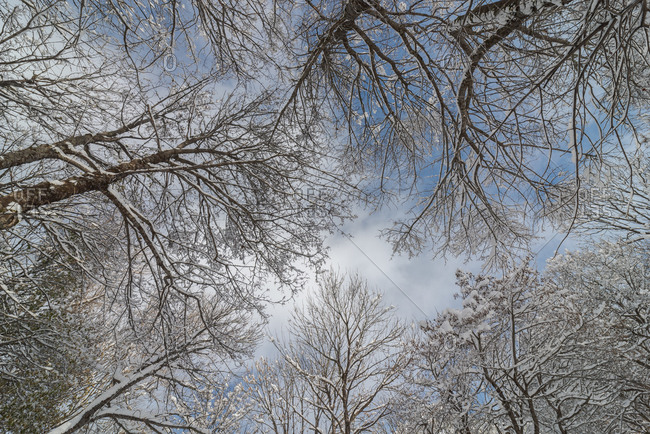 From below of picturesque view of dry tree branches covered slightly with snow under deep blue sky with clouds in wintertime