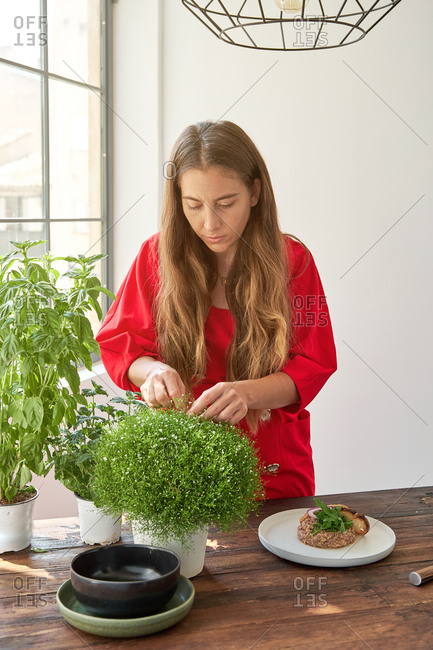 Serious housewife standing at table with plate of Steak tartare and picking fresh herbs for garnishing dish