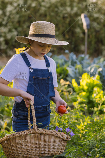 Side view of cute kid in straw hat standing in lush garden and collecting ripe vegetables in basket in summer