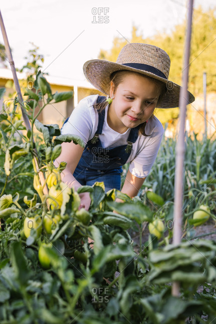 Cute kid in straw hat standing in lush garden and collecting ripe vegetables in basket in summer