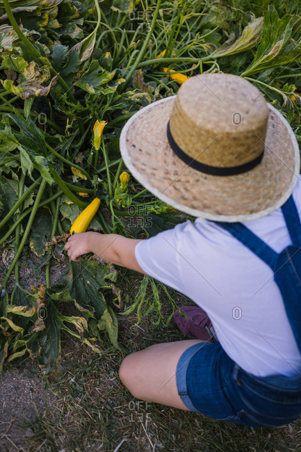 Back view of unrecognizable girl in straw hat sitting in garden picking ripped peppers in summer season