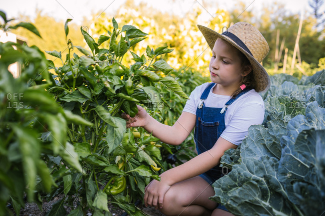 Side view of adorable girl in straw hat sitting in garden picking peppers in summer season