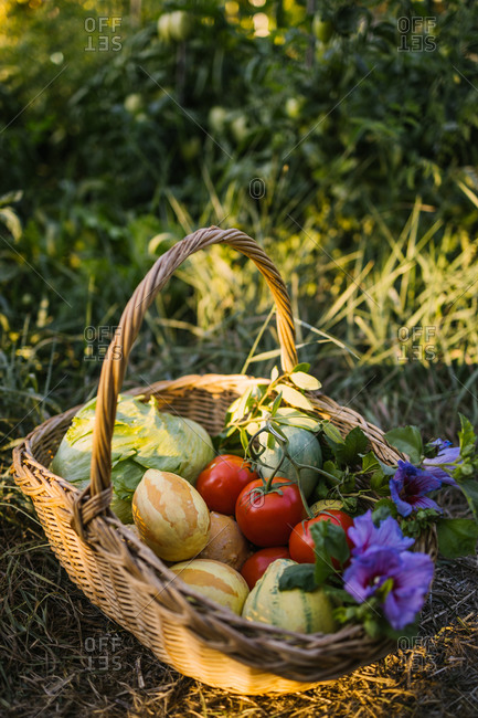 Wicker basket with fresh harvest and flowers placed on green lawn in countryside at sunset