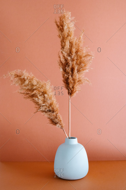 Simple clay vase with dry pampas grass placed on table on pink background in studio
