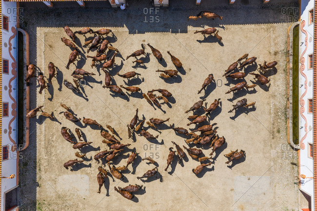 Alter do Chao, Portugal18 May 2020: Aerial view of Coudelaria de Alter, a stud farm breeding horses.