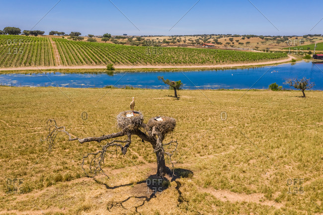 Aerial view of storks resting in their nest close to lake in nature, Albernoa, Portugal.