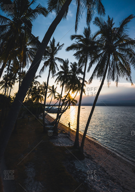 Aerial view of palm trees along the coast of Bohol at sunset, the Philippines.