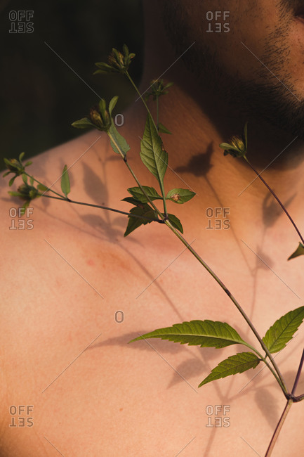 Wild flower buds on bare skin of a man, concept of tenderness