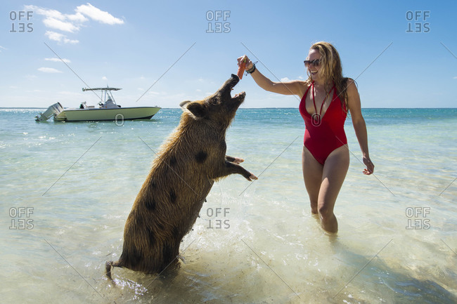 Cheerful young woman feeding carrot to pig at beach