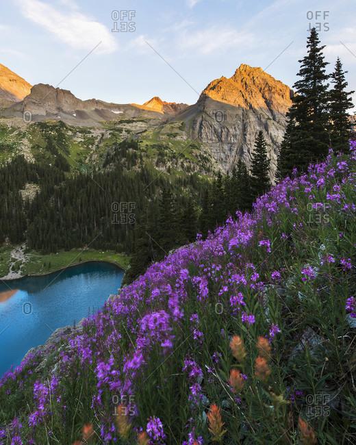 Purple wildflowers growing on mountain