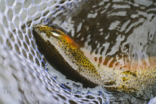 Close-up of fish in fishing net