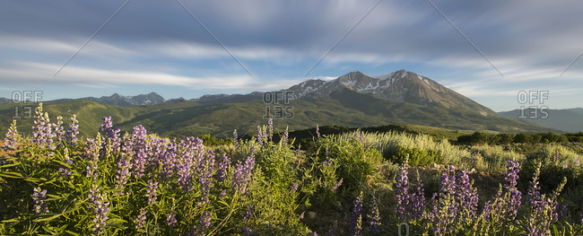 Wildflowers growing on land while mountains in background