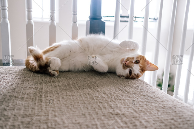 Young cat laying at the top of stairs showing its belly