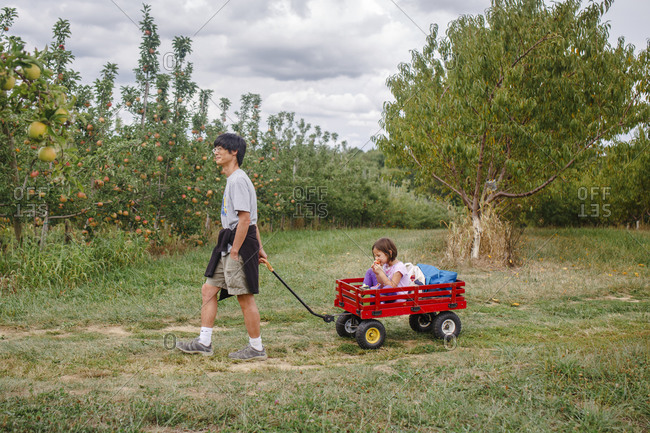 A father pulls a small child in a red wagon through an apple orchard