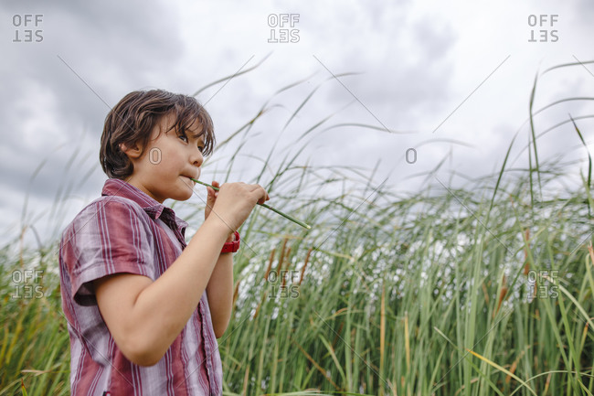 A boy stands by tall grass on a cloudy day blowing into a hollow reed