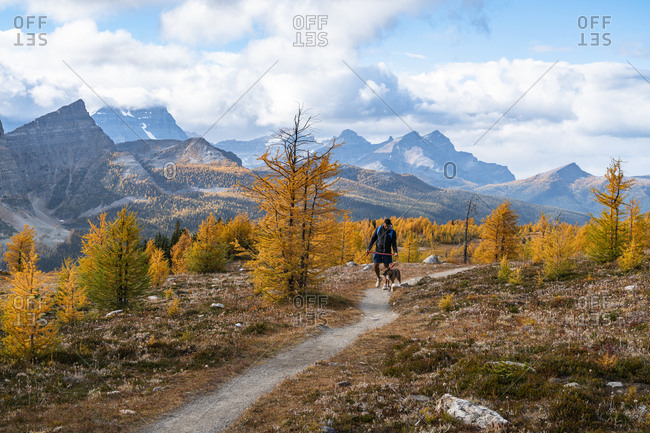 Walking Dog From Egypt Lakes to Healey Pass in Banff National Park