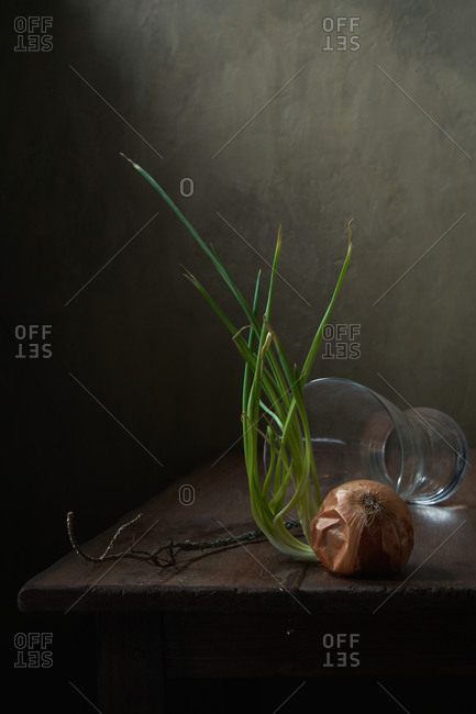Still life with sprouted onions close up