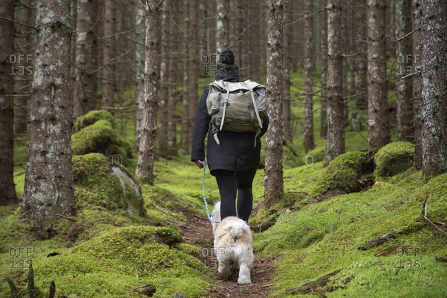 A person walking along a mossy trail in a dense pine forest with dogs