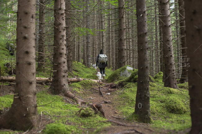 A hiker walking along a dense mossy trail with her dogs in Norway