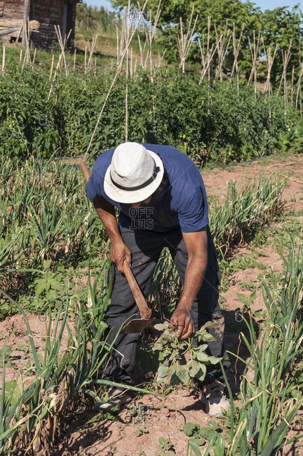 Colombian man with hat in the field digging