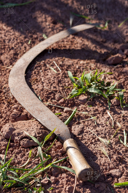Sickle, an orchard tool in the ground.