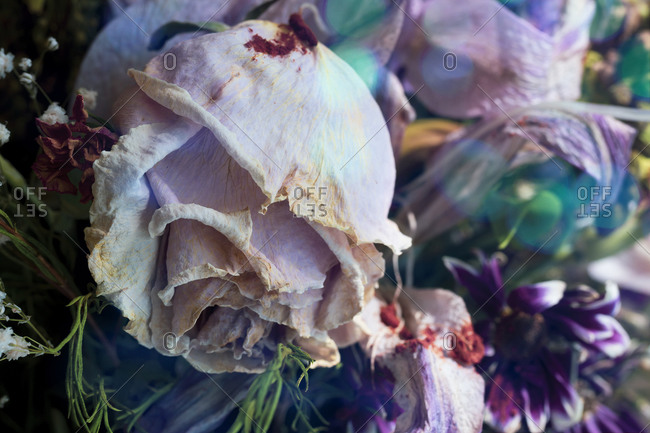 Bouquet of dead flowers with a withered rose in the foreground