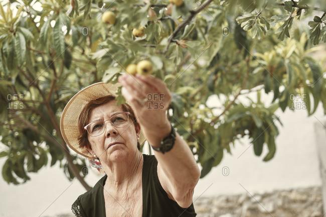 An elderly woman picking fruit from her own urban garden