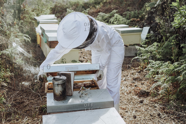 Young woman beekeeper at work in a nature