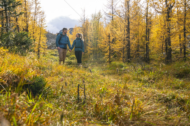 Couple Hiking Through Golden Larches at Paradise Valley