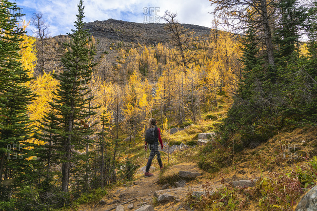 Hiking Through Paradise Valley in Lake Louise Banff National Park